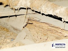 Termite Damage can cost thousands