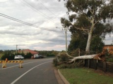 Trees fell throughout the Hunter region